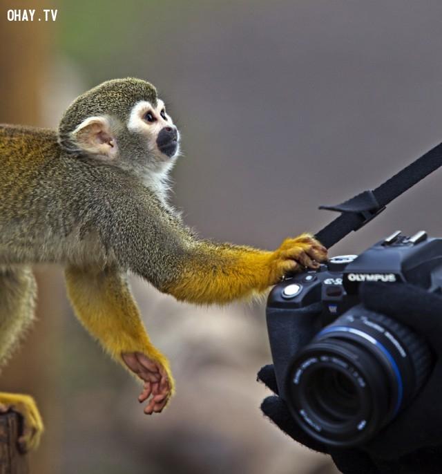 Ê, máy của tớ mà. trả đê...,đáng yêu,động vật,máy ảnh