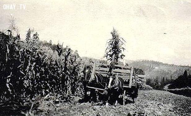 UFO xuất hiện ở trang trại Mĩ, 1920,bí ẩn ufo,hình ảnh ufo,khám phá