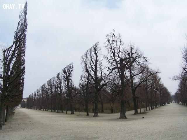 Schönbrunn, Áo,