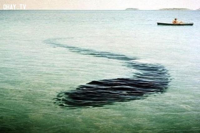 Quái vật đảo Hook,