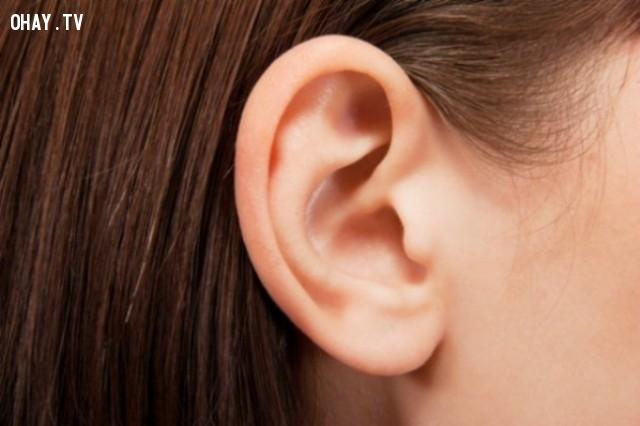 5. Cơ tai,bằng chứng tiến hóa,sự tiến hóa của loài người,phép lạ của tiến hóa,tổ tiên con người