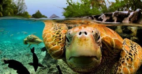 Ngỡ ngàng với những bức ảnh sống động được chụp từ dưới bề mặt nước