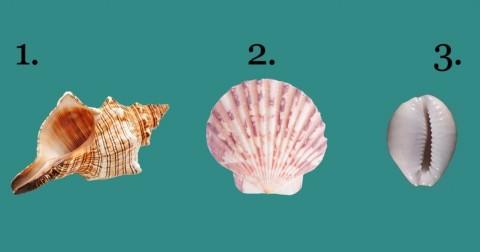 Chọn một vỏ sò và tính cách của bạn sẽ được phơi bày tất tần tật