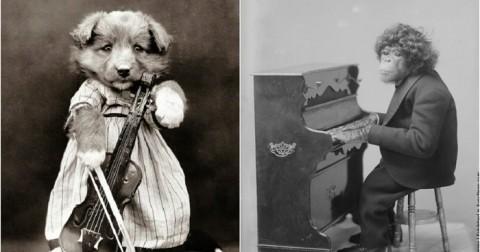 Cười không ngớt với 20 ảnh động vật chơi nhạc cụ