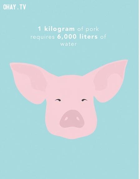 2. Sản xuất ra 1 kg thịt heo cần khoảng 6 000 lít nước. ,thực phẩm,tiết kiệm nước,sự thật thú vị,những điều thú vị trong cuộc sống