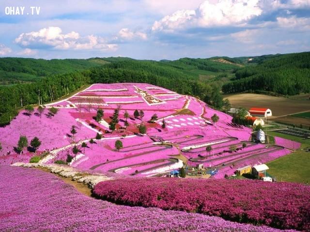 Công viên Takinoue, Nhật Bản,ảnh thiên nhiên đẹp,ảnh thiên nhiên rực rỡ sắc màu,ảnh đẹp