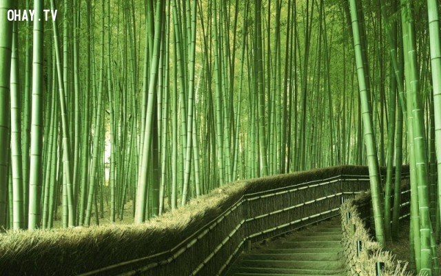 Rừng tre, Nhật Bản,ảnh thiên nhiên đẹp,ảnh thiên nhiên rực rỡ sắc màu,ảnh đẹp