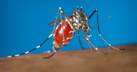 Báo động: ca nhiễm Zika đầu tiên đã xuất hiện tại Việt Nam
