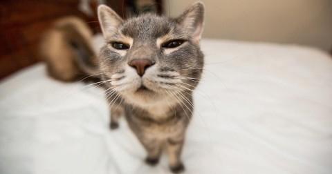 17 bức ảnh động về những chú mèo khiến bạn không thể nhịn cười