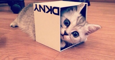 Đã tìm được lời giải cho triệu chứng 'nghiện hộp' của bọn mèo!