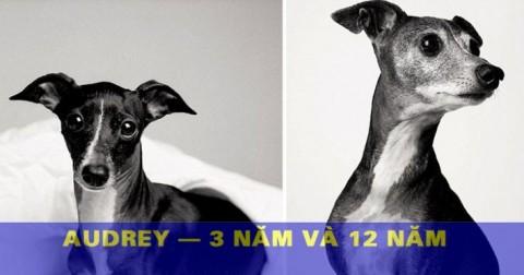 Dự án nhiếp ảnh 20 năm: 'Nhan sắc' thay đổi của loài vật trung thành nhất - Loài chó