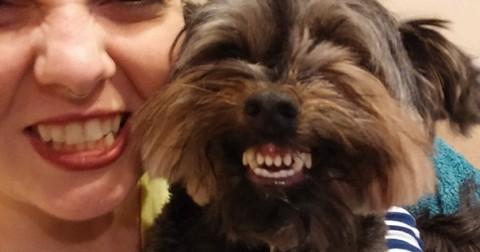 Bạn đã từng thấy 'động vật cười' chưa?