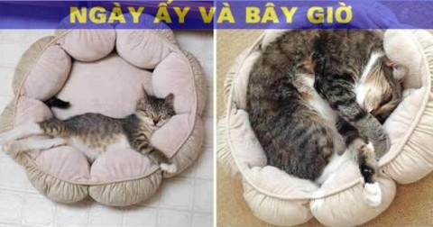 15 Hình ảnh 'ngày ấy - bây giờ' của những chú Mèo