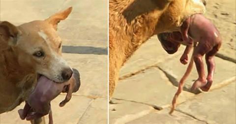 Chú chó tha một em bé mới sinh và điều tuyệt vời đã xảy ra
