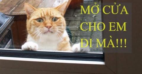 1001 kiểu biểu cảm của động vật khi đứng chờ cửa