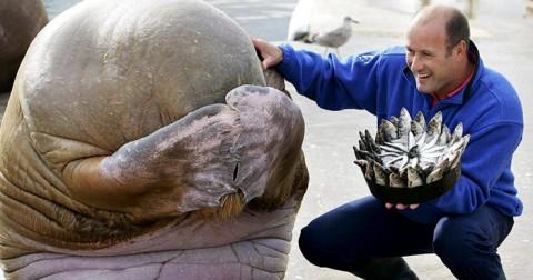 24 hình ảnh hài hước và hạnh phúc của loài vật khi nhận quà sinh nhật
