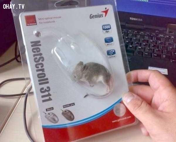 Tôi đặt mua online một chuột máy tính, kết quả là nhận được con chuột này nè!,hài hước,chất lượng hàng quảng cáo