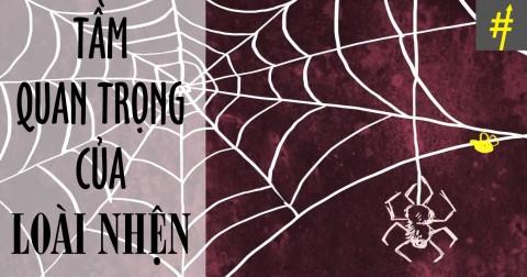 Thế giới sẽ như thế nào nếu loài nhện biến mất?