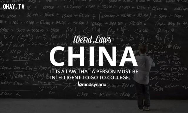 6. Trung Quốc: Có một luật lệ rằng một người phải thông minh mới được học đại học.,những điều thú vị trong cuộc sống,sự thật thú vị,luật lệ kỳ lạ,sự thật kỳ lạ,phạm pháp,vi phạm pháp luật