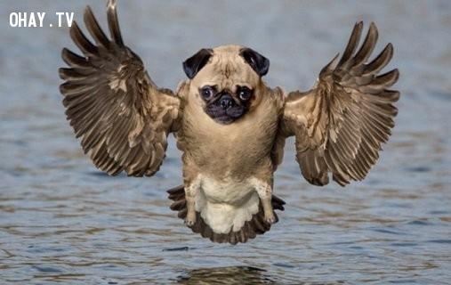 Một con chó cánh vịt đang bay trên mặt nước.,động vật lai,hình ảnh kỳ quặc,hài hước
