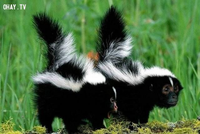 Đây là con chồn hôi khỉ hả?,động vật lai,hình ảnh kỳ quặc,hài hước