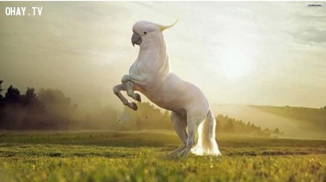 Một giống loài kì lân mới vừa ra đời!,động vật lai,hình ảnh kỳ quặc,hài hước