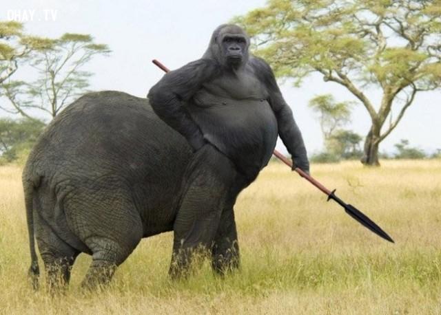 """Khỉ đột mình voi chuẩn bị """"chiến"""" với nhân mã thôi!,động vật lai,hình ảnh kỳ quặc,hài hước"""