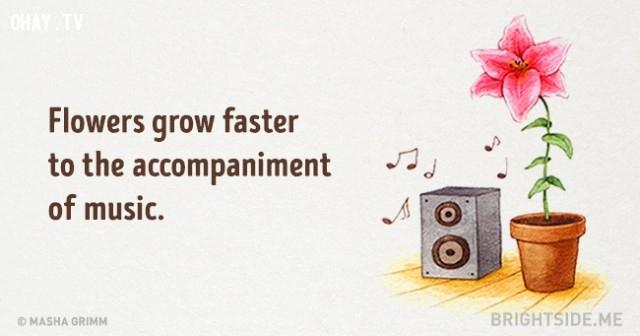 4. Hoa phát triển nhanh hơn khi có nhạc kèm theo.,những điều thú vị trong cuộc sống,sự thật thú vị,sự thật đáng kinh ngạc