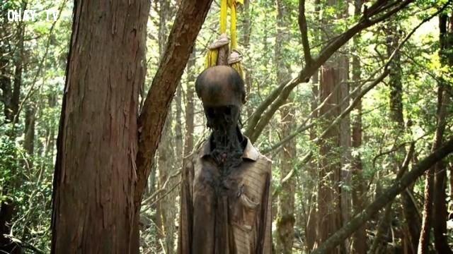 4. Khu rừng tự sát Aokigahara ở Nhật Bản,chuyện ma ám,câu chuyện ma ám khủng khiếp,ảnh ma ám,rùng rợn,ma quái,nguyền rủa