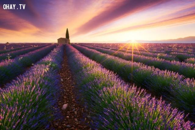 Provence, France,bình minh,thế giới,tuyệt,đẹp,ảnh