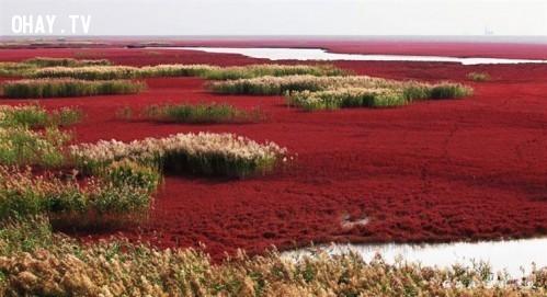 7. Biển Đỏ tại Trung Quốc,địa điểm tuyệt đẹp,địa điểm tuyệt đẹp ngỡ như chỉ có trong mơ,cảnh đẹp,ảnh đẹp,cảnh đẹp hùng vĩ,cảnh đẹp như mơ,khám phá thú vị
