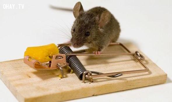 ,bẫy chuột độc đáo,sản phẩm độc đáo,cách bẫy chuột