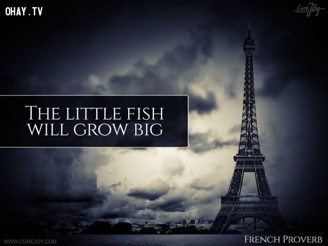 8. Cá bé sẽ phát triển thành cá lớn.,ngạn ngữ Pháp,ngạn ngữ hay,trích dẫn hay,Pháp,suy ngẫm,bài học cuộc sống