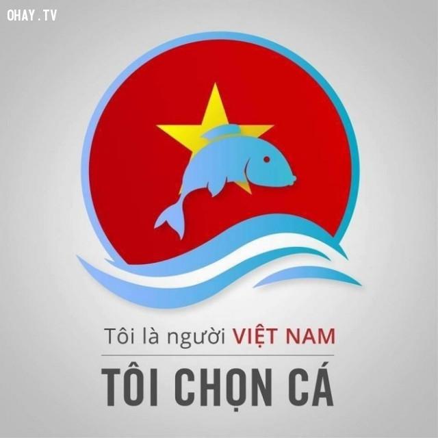 ,tôi chọn cá,ô nhiễm môi trường,ô nhiễm nước biển