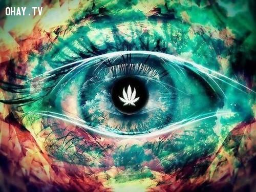 Cần sa nguy hiểm hơn người ta tưởng,Cần sa,ma túy,Những điều ít biết