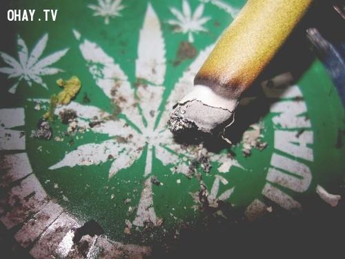 Tác hại khủng khiếp đến sức khỏe !,Cần sa,ma túy,Những điều ít biết