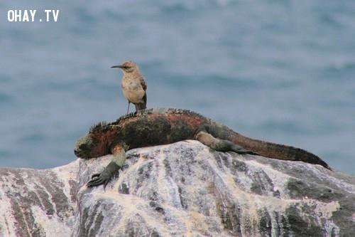 Chim Mimusmacdonaldi.,loài chim kỳ lạ,khám phá,Chim hải âu Petrel khổng lồ.