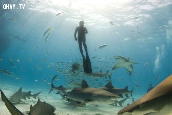3. Những con cá mập thần thánh,