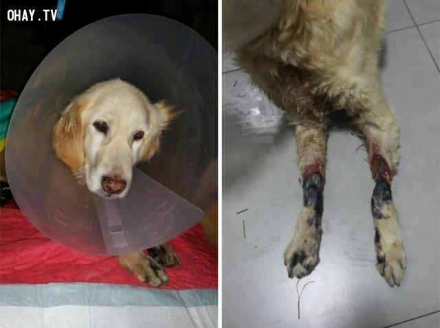 Hai chân của cô đã bị trói chặt đến nỗi thịt của cô đã bị nhiễm bệnh và bắt đầu thối rữa. ,