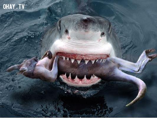 1. Sharkaroo,