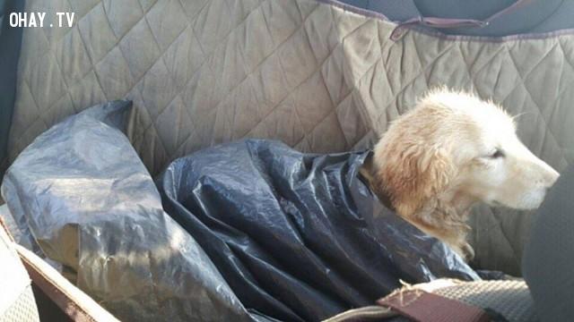 Không thể dùng thịt được nữa, cô đã bị bỏ trong một túi rác và chết dần trong khu vực giết mổ thịt chó của Hàn Quốc. ,