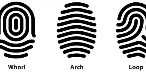 Cả thế giới chỉ có 3 chủng vân tay, vân tay bạn thuộc chủng nào ?