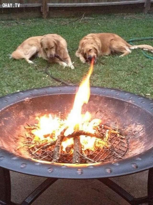 Chó rồng khè ra lửa ư?,hình ảnh hài hước,ảnh đẹp,ảnh chụp đúng thời điểm
