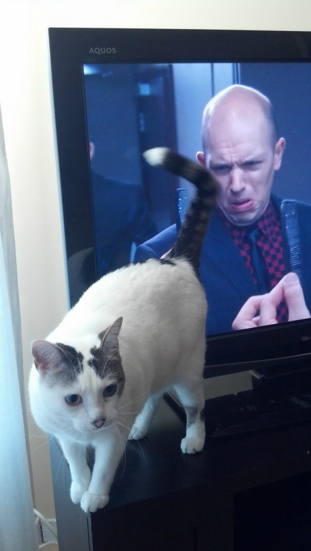 Ối chà! Cái con mèo này không biết lịch sự là gì cả.,hình ảnh hài hước,ảnh đẹp,ảnh chụp đúng thời điểm