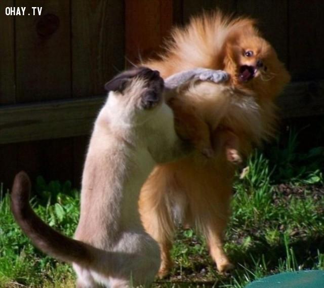 Trận chiến siêu kinh điển giữa chó và mèo.,hình ảnh hài hước,ảnh đẹp,ảnh chụp đúng thời điểm