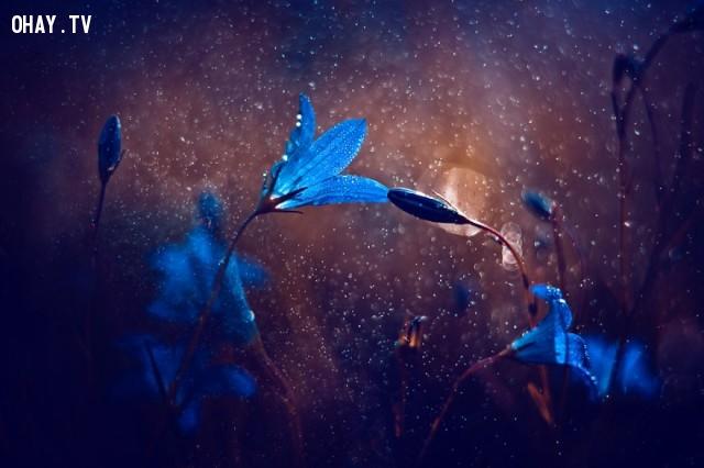 ,thế giới cổ tích,ảnh thiên nhiên,nhiếp ảnh gia,Magda Wasiczek,ảnh côn trùng,ảnh đẹp,tác phẩm nghệ thuật