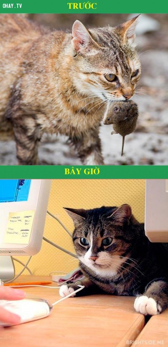 4. Bắt chuột,tiện ích hiện đại,công nghệ hiện đại,mèo