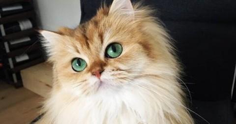 Gặp Smoothie – cô mèo ăn ảnh nhất thế giới