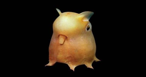 Top những loài động vật quý hiếm kỳ lạ bậc nhất hành tinh.