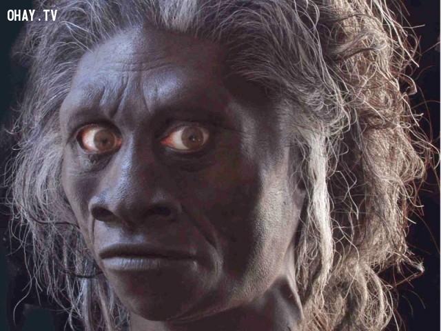 Ebu Gogo,sinh vật bí ẩn